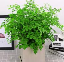 这八种清新悦目的桌面空气净化绿植,简单易养,你家有几种?