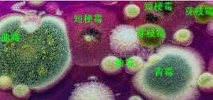 常见污染物——霉菌也能致癌!