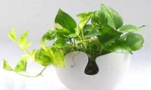 这些植物摆在室内,既能净化空气,又能装饰家里!